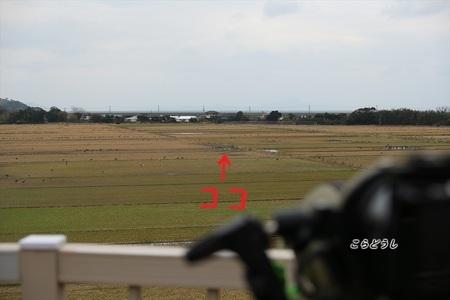 4]AJ4V2180アネハヅル_R.jpg