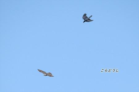 AJ4V1424オオタカブト_R.jpg